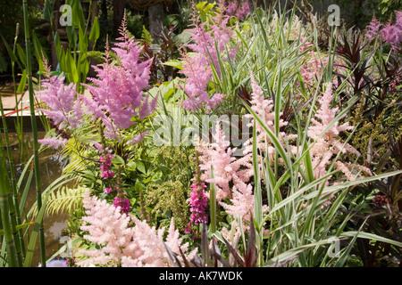 Dettaglio della crescente scuole giardino da Chris Beardshaw a Hampton Court flower show Foto Stock