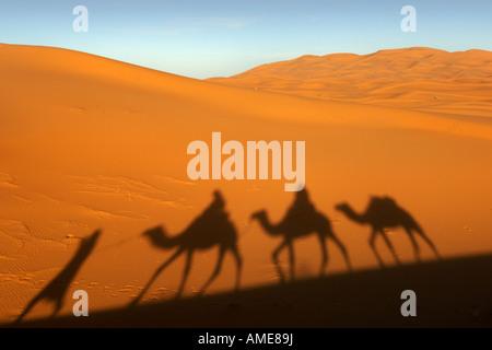 Ombra di un riff uomo porta tre cammelli dromedario sebbene le dune di sabbia di Erg Chebbi vicino a Merzouga in Marocco orientale. Foto Stock