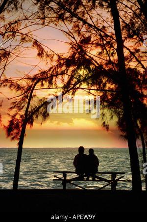 Matura in silhouette seduta sul banco di lavoro guardando fuori al tramonto sul mare e circondato da alberi di alto Foto Stock