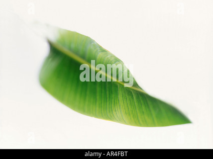 Verde foglia Foto Stock