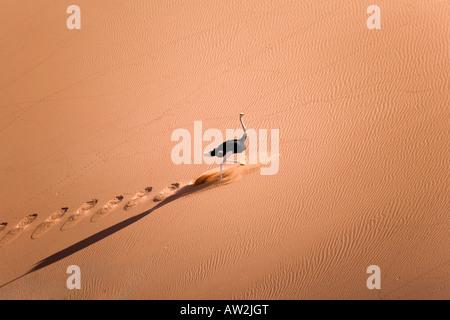 Struzzo in esecuzione su dune Foto Stock