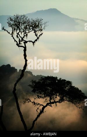 Misty paesaggi all'alba nella Pirre montagne del Parco Nazionale del Darién , provincia di Darien, Repubblica di Foto Stock
