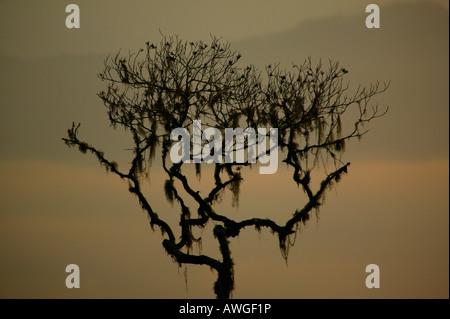 Struttura ad albero e paesaggi misty a Cerro Pirre nel Parco Nazionale del Darién, provincia di Darien, Repubblica di Panama.