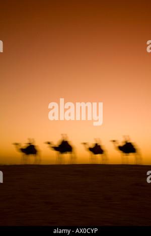 Cammelli vicino alle Piramidi di Giza, Il Cairo, Egitto Foto Stock