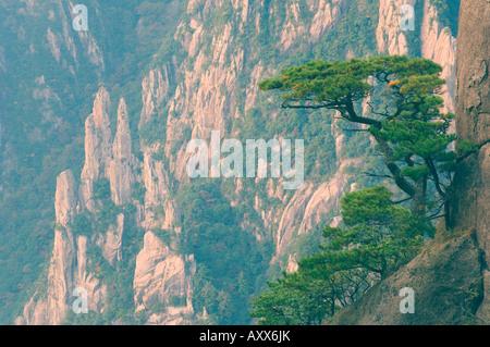 Rocce e alberi di pino, Nuvola Bianca Scenic Area, Huang Shan (gialle di montagna), il Sito Patrimonio Mondiale Foto Stock