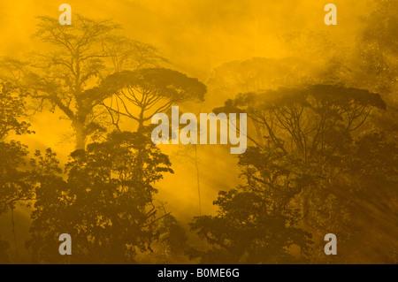 COSTA RICA mattina raggi solari che filtrano attraverso la mattina presto la luce nella foresta pluviale inferiore del fiume Pacuare pendenza dei Caraibi