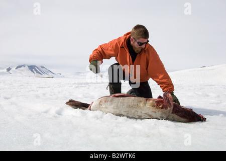 Un cacciatore di budella una guarnizione sul mare ghiacciato ghiaccio del fiordo Scoresbysund sul bordo di Ittoqqortoormiit, Foto Stock
