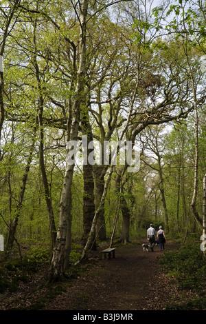 Giovane passeggiate nelle pinete (Woodland Trust), Woodhall Spa, Lincolnshire, Inghilterra Foto Stock