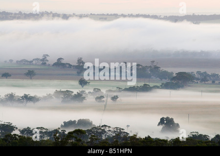 Mattina, Valle di Avon, York, Australia occidentale, Australia Foto Stock