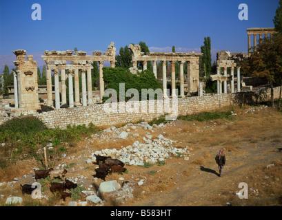 Tempio di Venere, Baalbek, Sito Patrimonio Mondiale dell'UNESCO, Libano, Medio Oriente Foto Stock