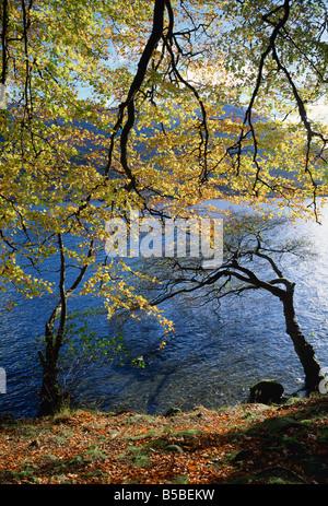 Alberi di autunno a Ullswater, Parco Nazionale del Distretto dei Laghi, Cumbria, Inghilterra, Europa Foto Stock