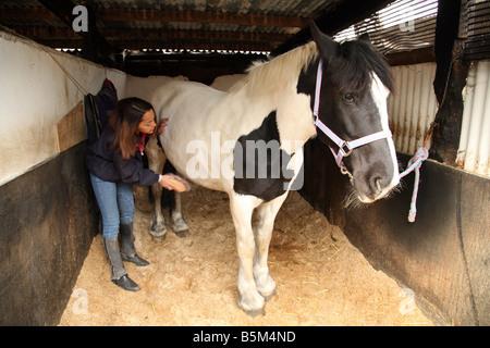 Una ragazza adolescente governare il suo cavallo pet nella stalla, Cambridgeshire, Inghilterra Foto Stock