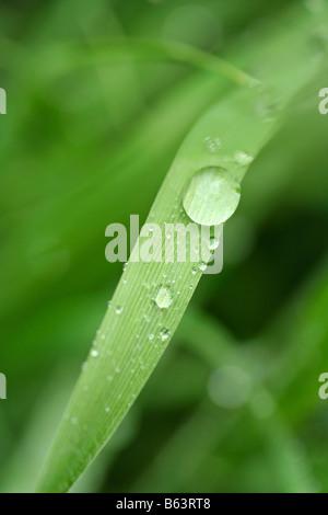 Gocce di erba Foto Stock