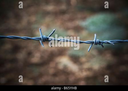 Filo spinato Libano Medio Oriente Foto Stock