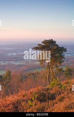 La mattina presto [vista dal Leith Hill] [North Downs] [Surrey Hills] Surrey Foto Stock