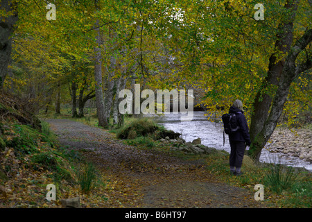 Autunno a piedi nella zona di Applecross House, Applecross, Wester Ross, Ross and Cromarty, West Highlands, Scozia Foto Stock