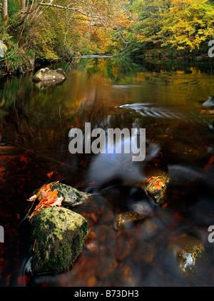 Autunno a Fiume Findhorn, vicino a Forres, Moray Shire, Scozia