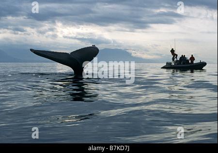 Humpback Whale scandaglio, guardato da ricercatori, Alaska