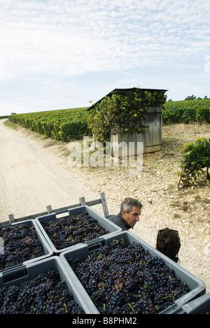 Francia, Champagne-Ardenne, Aube, lavoratori chiacchierando in vigneto, casse piene di uva in primo piano Foto Stock