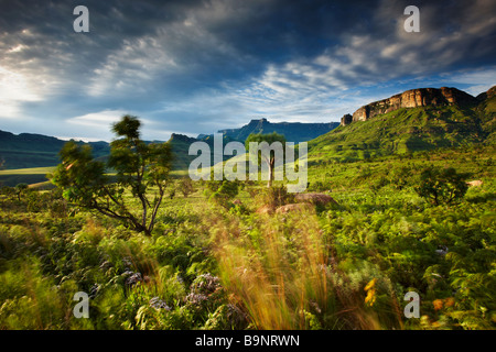 L'Anfiteatro, Royal Natal National Park, Drakensberg Mountains, KwaZulu Natal, Sud Africa Foto Stock