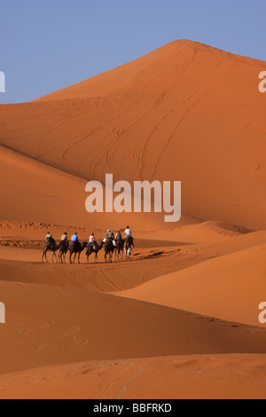 Africa, Nord Africa, Marocco deserto del Sahara, Merzouga Erg Chebbi, turisti cammelli di equitazione Foto Stock