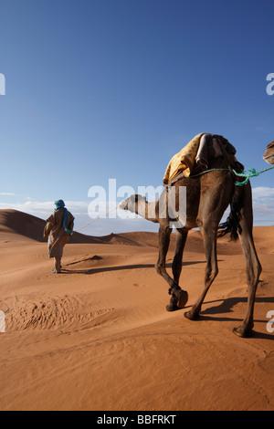 Africa, Nord Africa, Marocco deserto del Sahara, Merzouga Erg Chebbi, Berber Tribesman cammello leader