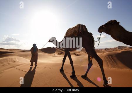 Africa, Nord Africa, Marocco deserto del Sahara, Merzouga Erg Chebbi, Berber Tribesman cammelli leader Foto Stock