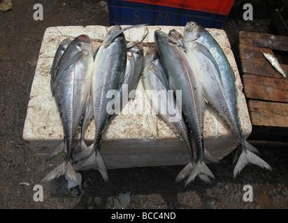 Il pesce in vendita nel mercato di Connemara, Trivandrum, Kerala, India Foto Stock
