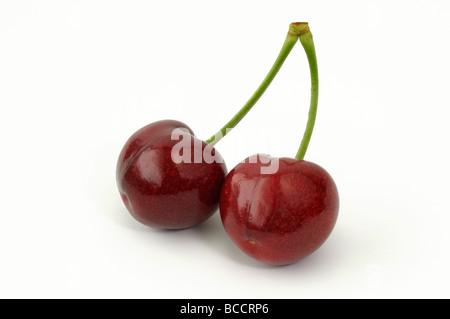 Ciliegio dolce (Prunus avium), coppia di ciliegie mature, studio immagine Foto Stock