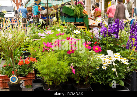 Un fiore in stallo al giovedì farmer s market nel tipico mercato inglese comune di Devizes Wiltshire, Inghilterra Foto Stock