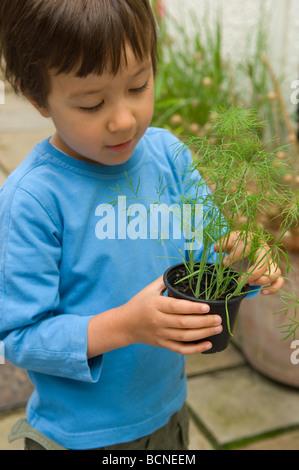 Un bambino di sei anni ragazzo foratura giovani piantine di finocchio nel giardino, England, Regno Unito Foto Stock