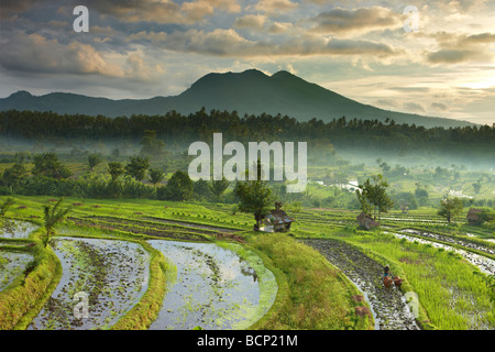 Bue guidato aratro in campi di riso terrazzati nr Tirtagangga all'alba con il picco vulcanico di Gunung Lempuyang, Foto Stock