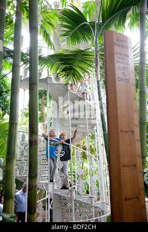 Due ragazzi guardare gli alberi nella casa delle palme, Kew Gardens a Londra Foto Stock