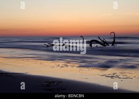 Driftwood nell'oceano al tramonto sulla Costa della Carolina del Nord nella Outer Banks Foto Stock