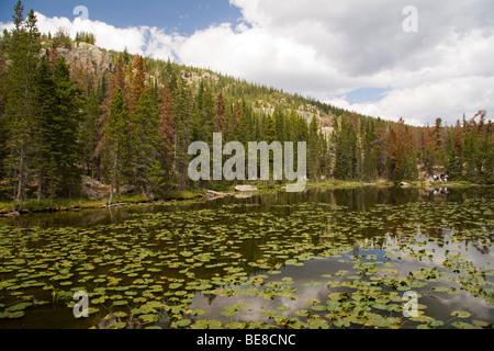 Ninfa Lago, Rocky Mountain National Park, COLORADO, Stati Uniti d'America Foto Stock