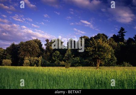 Polacco pittoresca Azienda Agricola Biologica Foto Stock