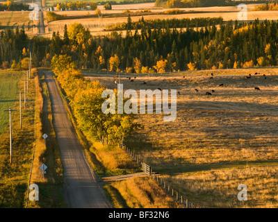 Un paese di ghiaia strada conduce al cervo rosso fiume su una mattina autunnale con bestiame al pascolo al pascolo Foto Stock