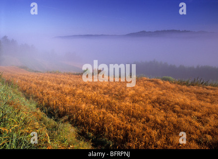 Paese Polonia fattoria biologica nebbia nebbia Foto Stock