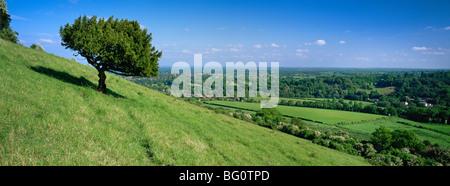 Estate vista verso sud con scatola albero dal Box Hill, North Downs, Surrey Hills, Surrey, England, Regno Unito, Foto Stock