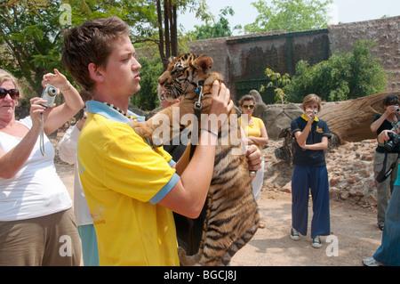 Un custode del Regno Unito trasporta un cucciolo di tigre a tiger tempio in Kanchanaburi, Thailandia Foto Stock