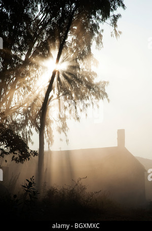 Sunburst attraverso gli alberi al di sopra di un fienile in India. Silhouette Foto Stock