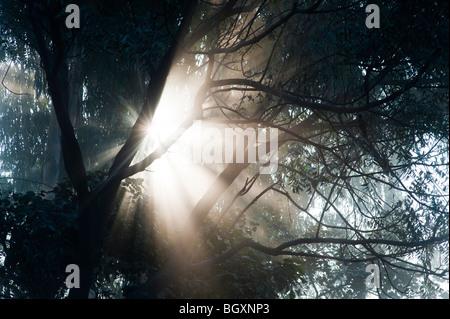 Sunburst attraverso gli alberi in India, Silhouette Foto Stock
