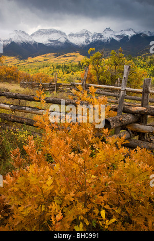 I colori autunnali e la gamma Sneffels, San Juan Mountains, Colorado. Foto Stock