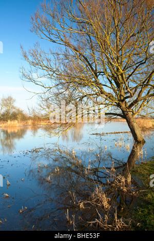 Struttura invernale riflettendo su un invaso Fiume Tamigi in Oxfordshire, Regno Unito Foto Stock
