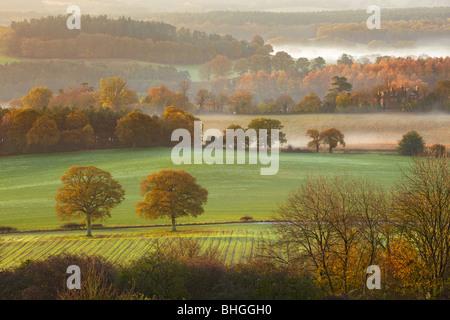La mattina presto viste attraverso la collina da Newlands Corner guardando verso Albury Surrey Foto Stock