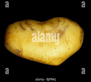 Tubero di patata che mostra sintomi esterni di spraing causato da Potato virus di battito (PRV) Foto Stock