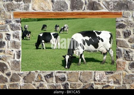 Finestra di vista le mucche al pascolo prato pietra parete in muratura Foto Stock