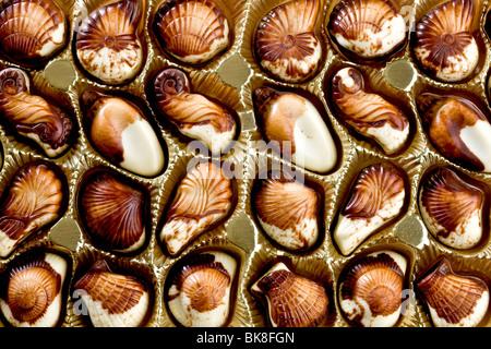 Il cioccolato belga di conchiglie Foto Stock