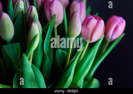 Un mazzo di tulipani rosa su sfondo nero Foto Stock