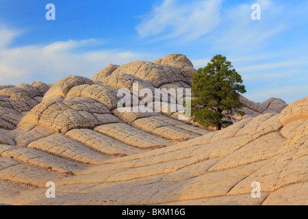 Albero tra 'brain rock' formazioni di arenaria nella tasca bianco unità delle scogliere di Vermilion monumento nazionale Foto Stock